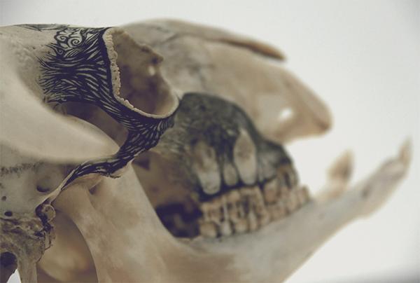 Illustrations on Skulls by DZO Olivier (1)