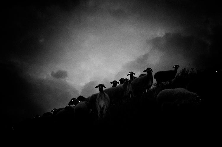 a-ravens-dream-by-stavros-stamatiou-2