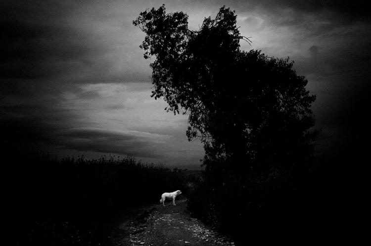 a-ravens-dream-by-stavros-stamatiou-8